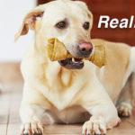 Bones for your pet